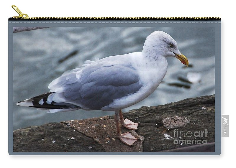 Seagull Art Nature Fauna Bird Portrait Outdoors Wildlife Feathers Thoughtful Expression Close Up Grey Water Background Canvas Print Metal Frame Wood Print Poster Print Available On Mugs T Shirts Tote Bags Shower Curtains Pouches Weekender Tote Bags And Phone Cases Carry-all Pouch featuring the photograph Where Did I Put That Fish? by Marcus Dagan