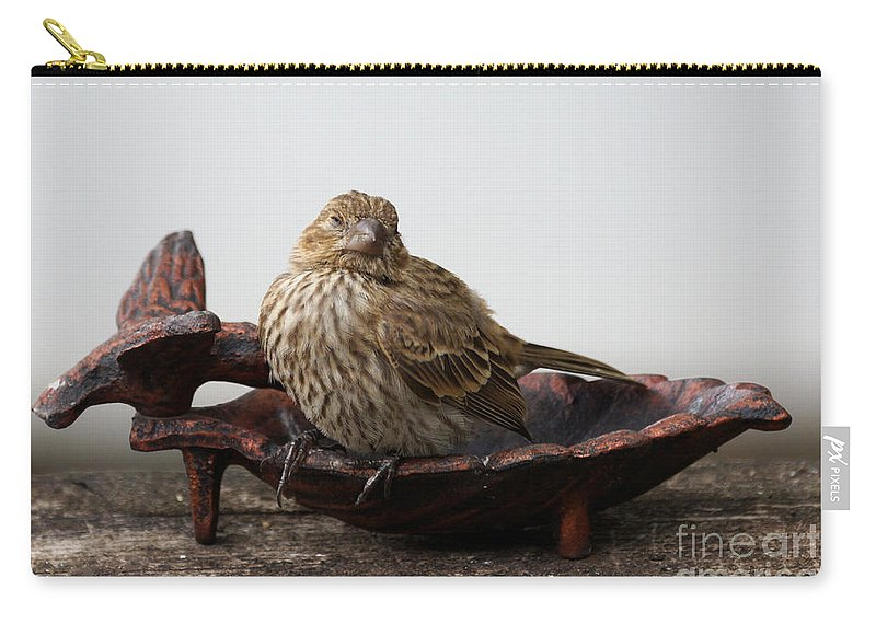 House Finch Carry-all Pouch featuring the photograph Where Is The Food by Lori Tordsen