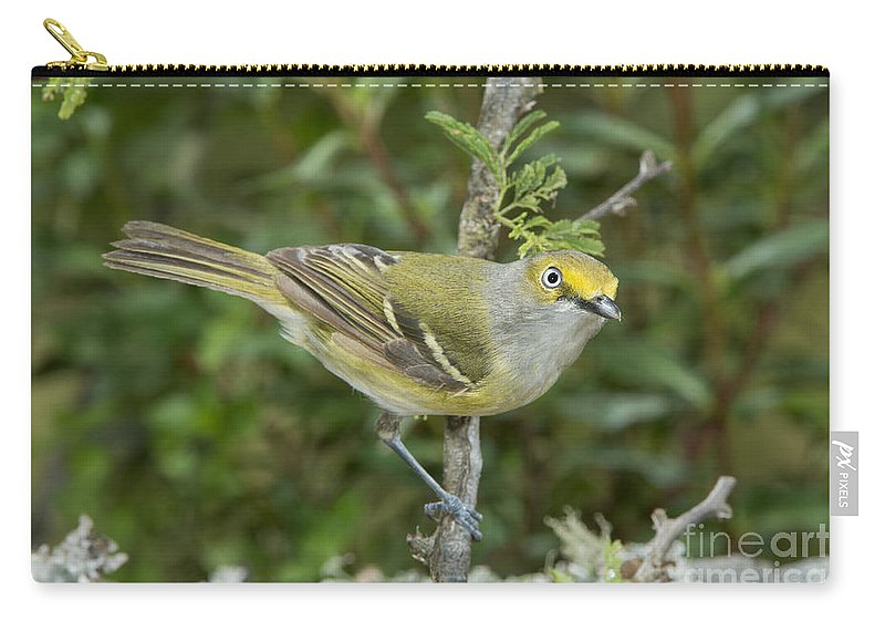 White-eyed Vireo Carry-all Pouch featuring the photograph White-eyed Vireo by Anthony Mercieca