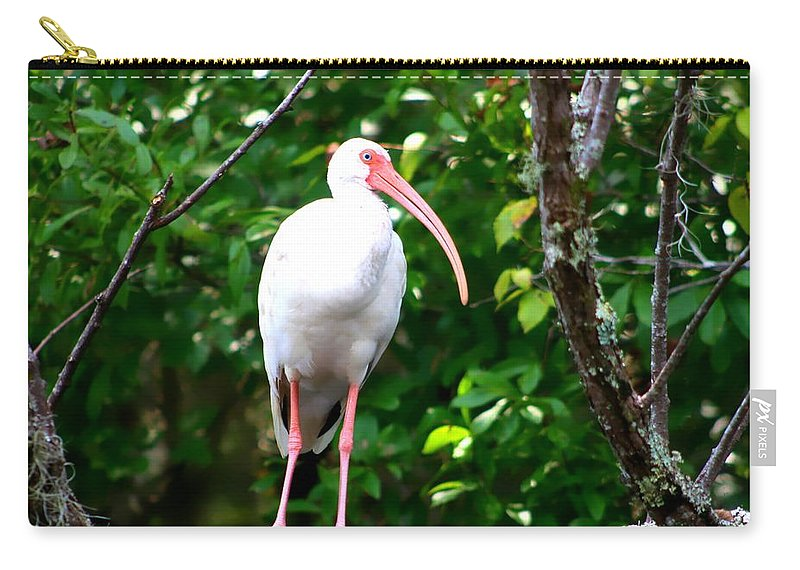 Florida Birds Carry-all Pouch featuring the photograph White Ibis by Debra Forand