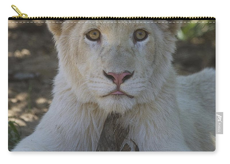 White Lion Carry-all Pouch featuring the photograph White Lion Cub by Saija Lehtonen
