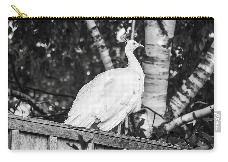 Leucism Carry-all Pouch featuring the photograph White Peacock by Tracy Winter