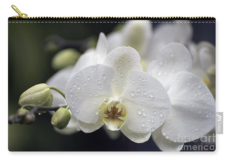 White Orchid Carry-all Pouch featuring the photograph White Phalaenopsis With Water Drops 5797 by Terri Winkler