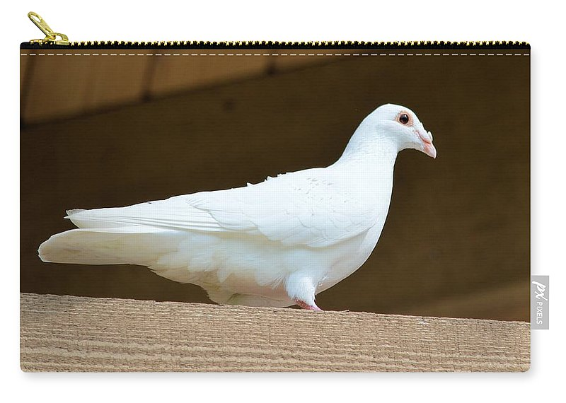 Pigeon Carry-all Pouch featuring the photograph White Pigeon by Bonfire Photography