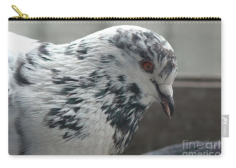 Birds Carry-all Pouch featuring the photograph White Pigeon by Jivko Nakev