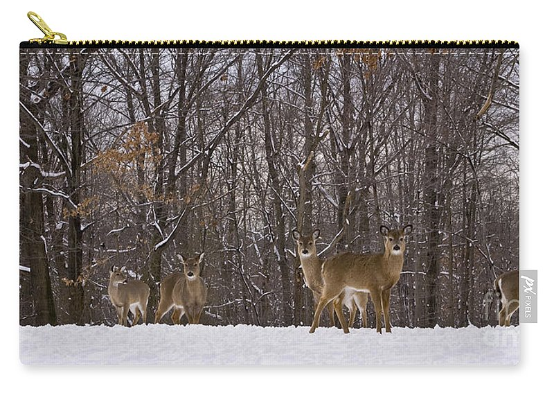 Deer Carry-all Pouch featuring the photograph White Tailed Deer by Anthony Sacco