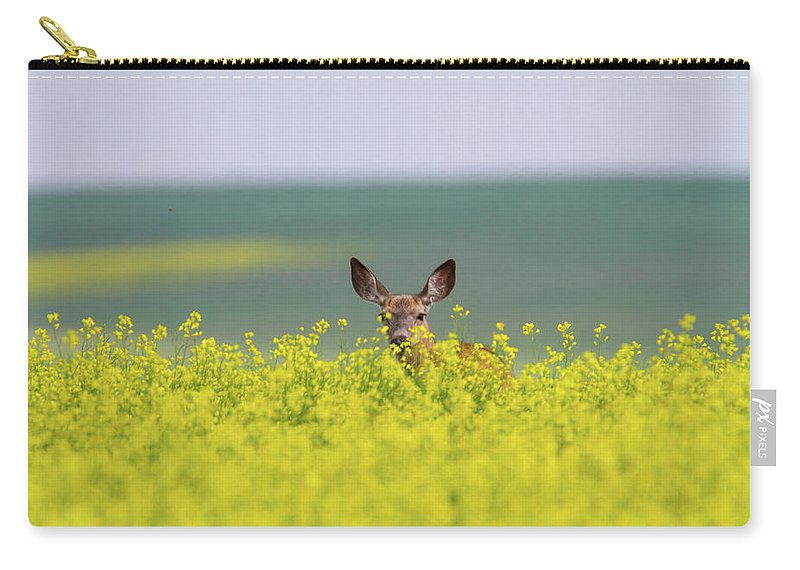 Alertness Carry-all Pouch featuring the photograph White-tailed Doe by Ed Matuod