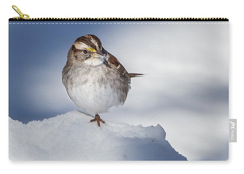 White Thoated Sparrow Carry-all Pouch featuring the photograph White Throated Sparrow Square by Bill Wakeley