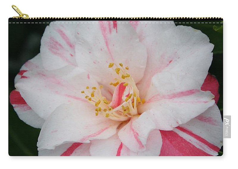White Camellia Carry-all Pouch featuring the photograph White With Pink Camellia by Christiane Schulze Art And Photography