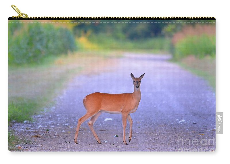Deer Carry-all Pouch featuring the photograph Whitetail Doe by Deanna Cagle