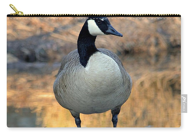 Wild Canadian Goose Carry-all Pouch featuring the photograph Wild Canadian Goose by Maria Urso