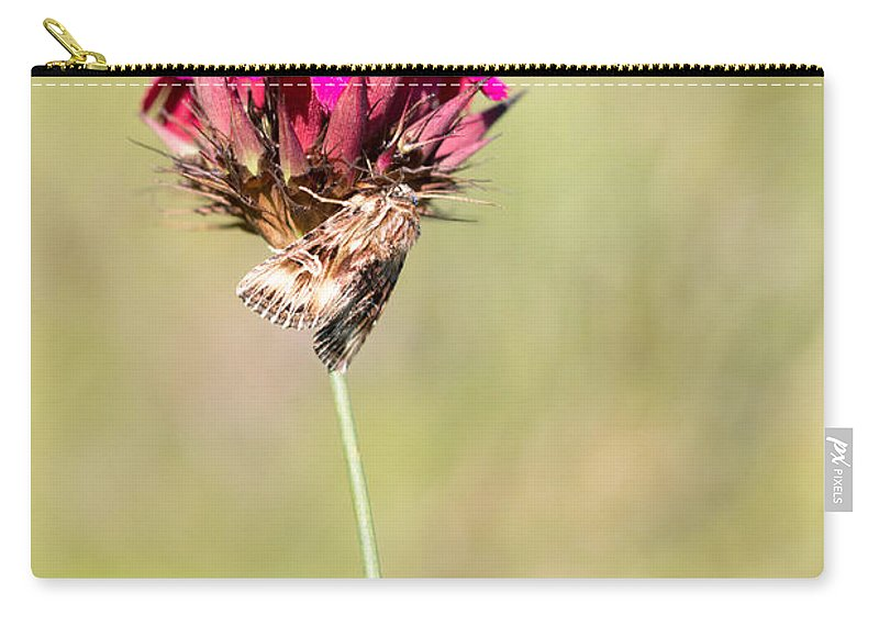 Actinotia Radiosa Carry-all Pouch featuring the photograph Wild Carnation With Nocturnal Moth by Jivko Nakev