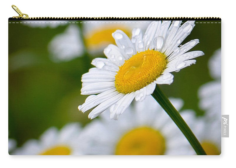 Daisy Carry-all Pouch featuring the photograph Wild Daisies After The Rain by Amy Porter