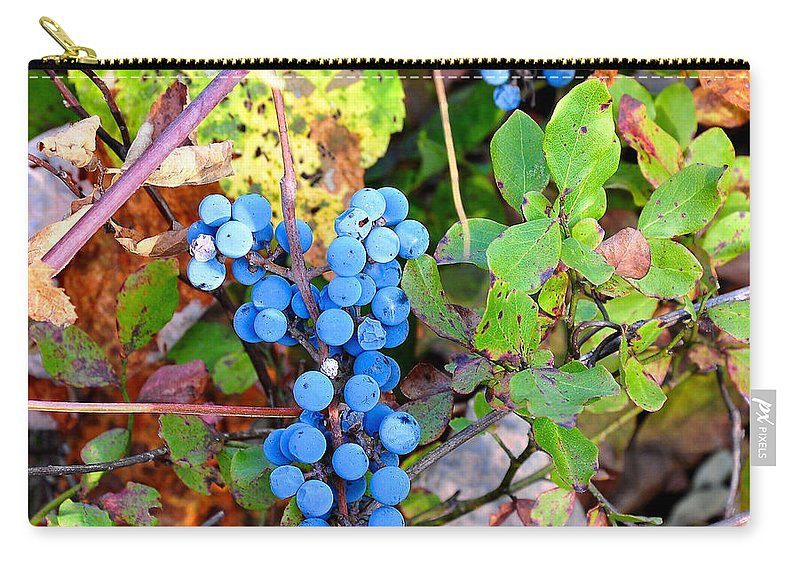 Fox Grapes Carry-all Pouch featuring the photograph Wild Grapes by Todd Hostetter