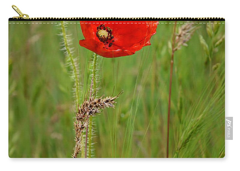 Poppy Carry-all Pouch featuring the photograph Wild Poppy by Nikolyn McDonald