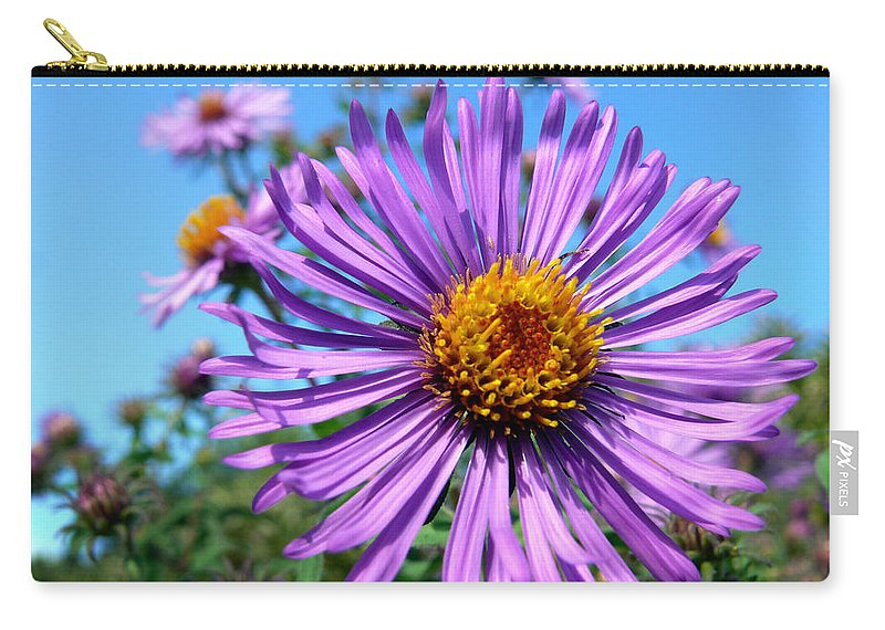 Wildflower Carry-all Pouch featuring the photograph Wild Purple Aster by Christina Rollo
