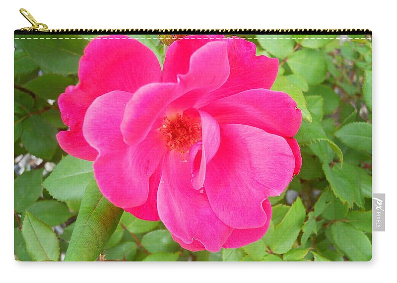 Flowers Carry-all Pouch featuring the photograph Wild Rose by Coleen Harty