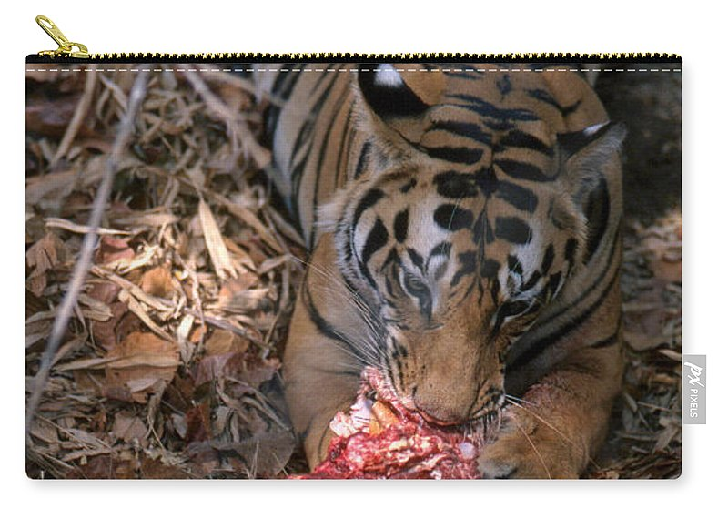 Wild Tiger Eating Deer Carry-all Pouch