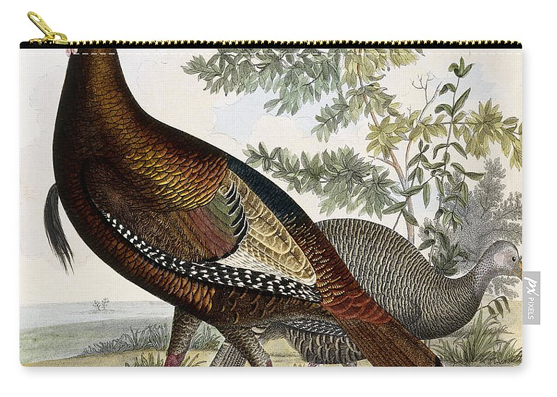 Turkey Carry-all Pouch featuring the painting Wild Turkey by Titian Ramsey Peale