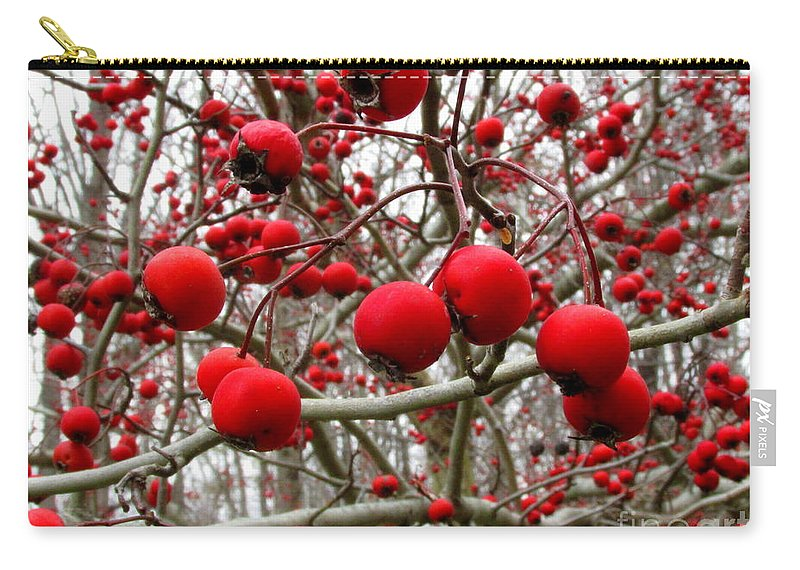 Red Berries Winter Berries Wild Berries Winter Flora Winter Color Natural Christmas Decoration Seasonal D�cor Natural Interior Design Wall Art Red And Gray Art Carry-all Pouch featuring the photograph Winter Berryscape by Joshua Bales