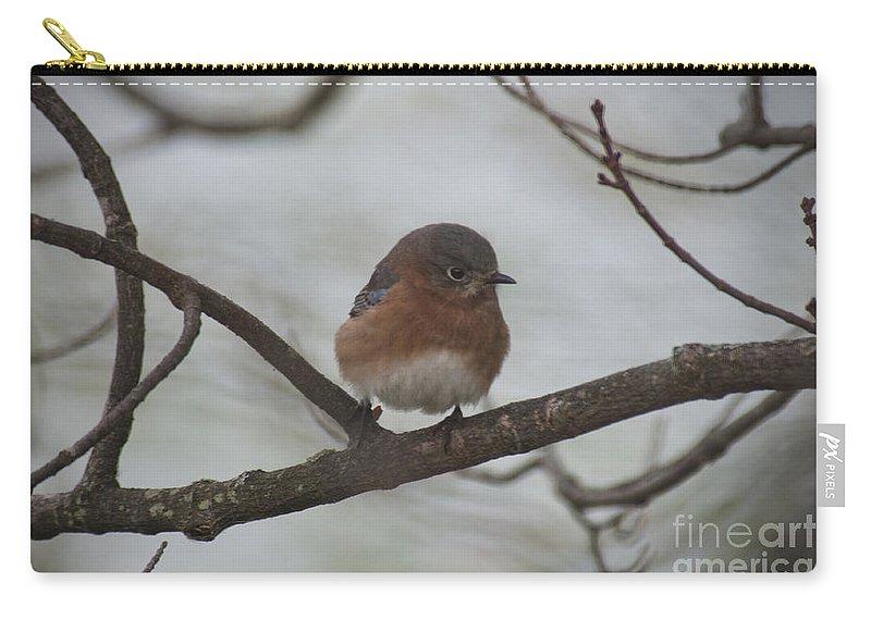 Bird Carry-all Pouch featuring the photograph Winter Blue Bird 1 by David Arment