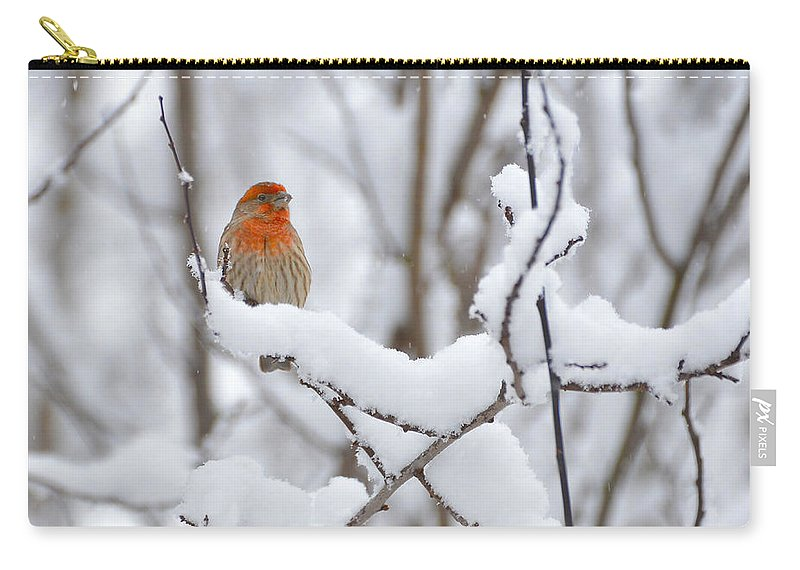 Snow Carry-all Pouch featuring the photograph Winter Color by Randy Giesbrecht
