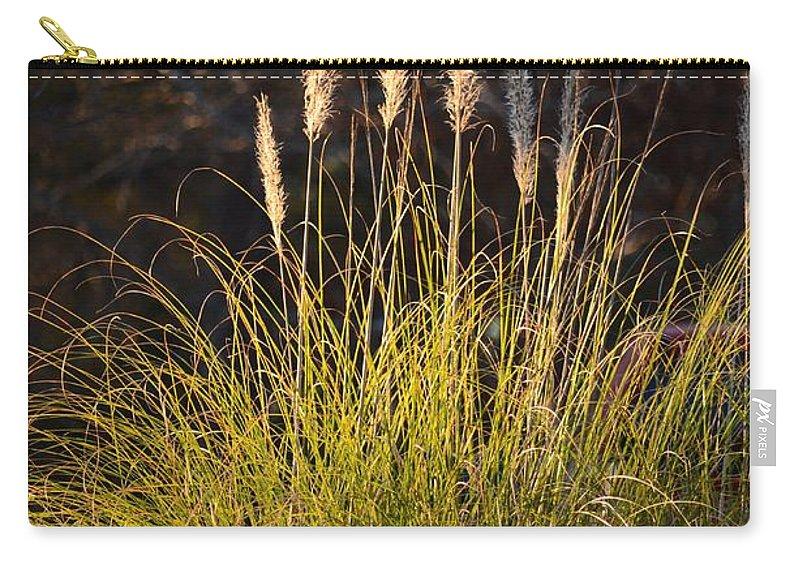 Winter Pampas Illumination Carry-all Pouch featuring the photograph Winter Pampas Illumination by Maria Urso