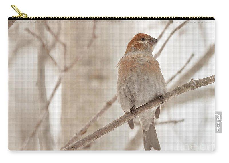Pine Grosbeak Carry-all Pouch featuring the photograph Winter Pine Grosbeak by Cheryl Baxter