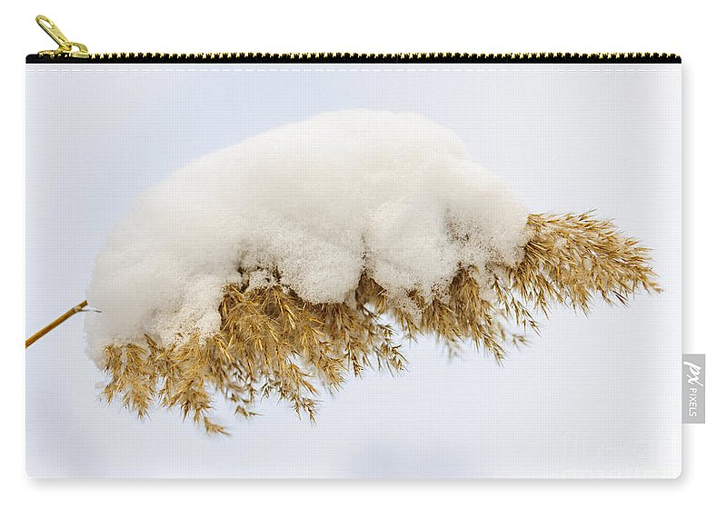 Reed Carry-all Pouch featuring the photograph Winter Reed Under Snow by Elena Elisseeva