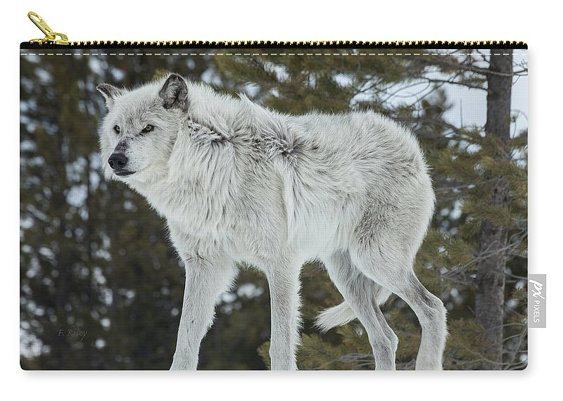 Wolf Carry-all Pouch featuring the photograph Wolf - Discovery by Fran Riley