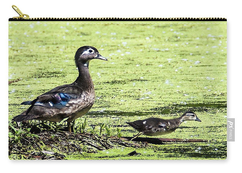 Heron Heaven Carry-all Pouch featuring the photograph Wood Duck And Baby by Edward Peterson