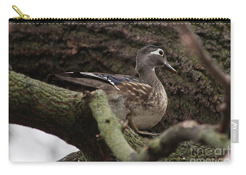 Wood Duck Carry-all Pouch featuring the photograph Wood Duck by Lori Tordsen
