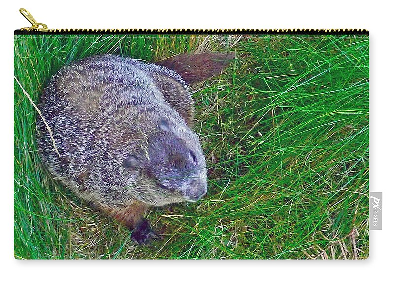 Woodchuck In Salmonier Nature Park Carry-all Pouch featuring the photograph Woodchuck In Salmonier Nature Park-nl by Ruth Hager