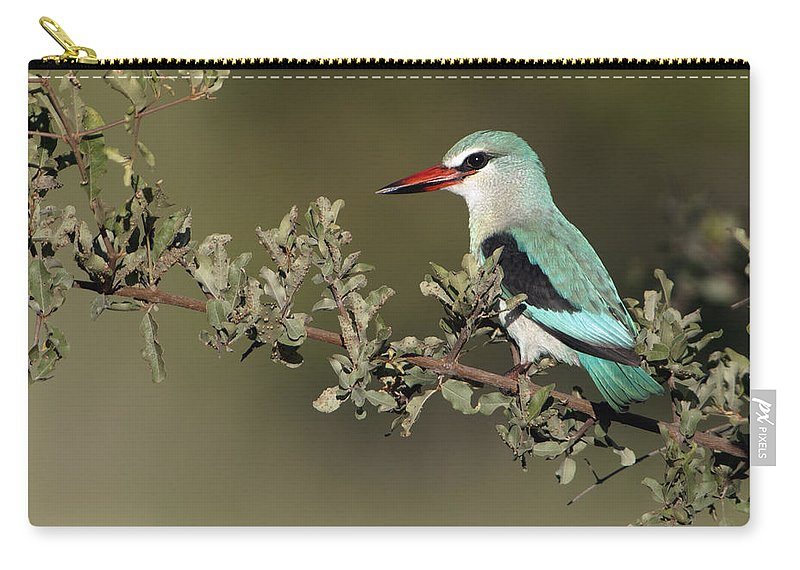 Nis Carry-all Pouch featuring the photograph Woodland Kingfisher Kruger Np South by Alexander Koenders