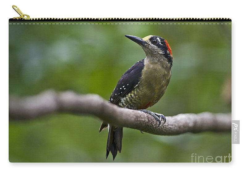 Festblues Carry-all Pouch featuring the photograph Woody Woodpecker.. by Nina Stavlund