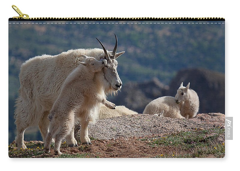 Mountain Goats; Posing; Group Photo; Baby Goat; Nature; Colorado; Crowd; Baby Goat; Mountain Goat Baby; Happy; Joy; Nature; Brothers Carry-all Pouch featuring the photograph Xx's And Oo's by Jim Garrison