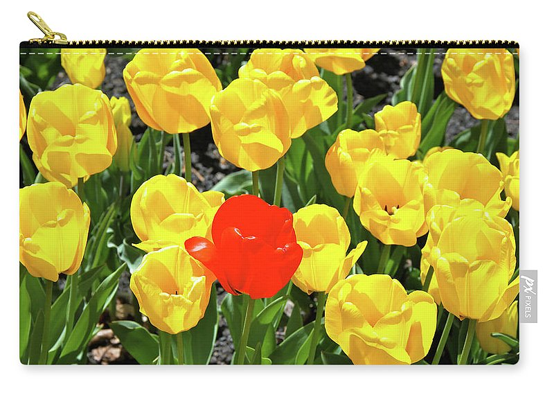 Tulips Carry-all Pouch featuring the photograph Yellow And One Red Tulip by Ed Riche