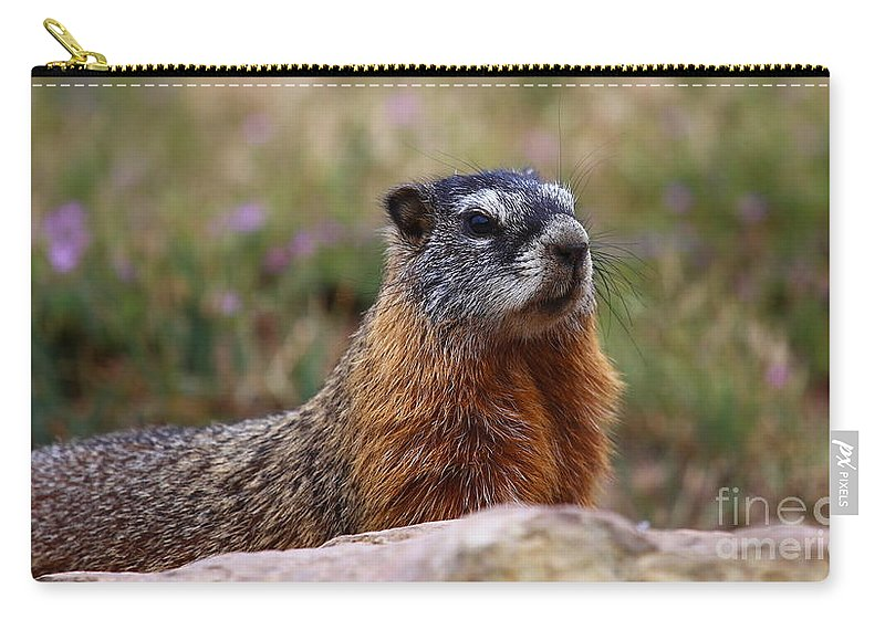 Marmot Carry-all Pouch featuring the photograph Yellow Bellied Marmot by Marty Fancy