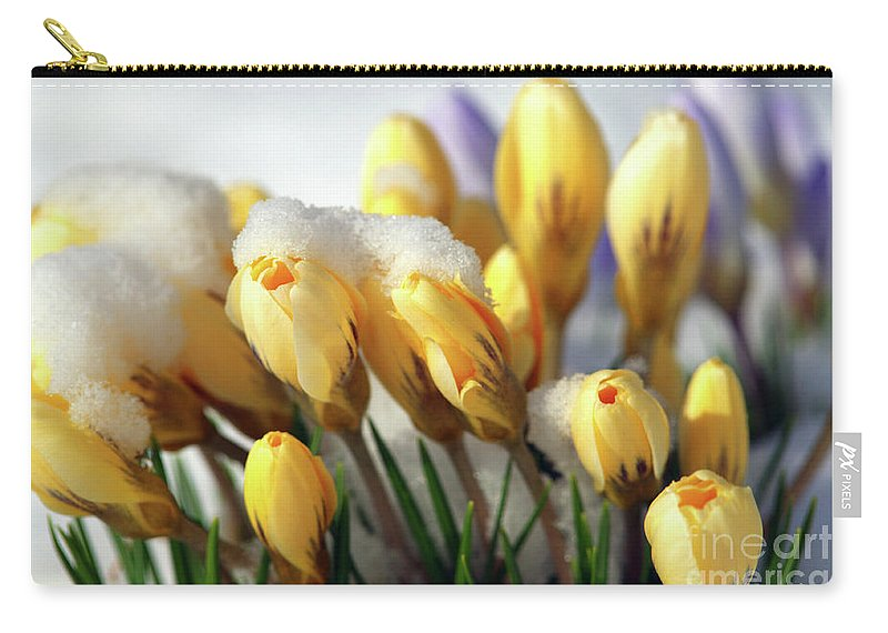Yellow Crocuses Carry-all Pouch featuring the photograph Yellow Crocuses In The Snow by Sharon Talson