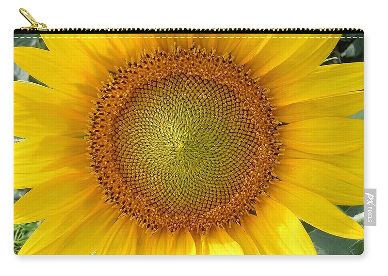 Sunflower Carry-all Pouch featuring the photograph Yellow Glory #1 by Robert ONeil