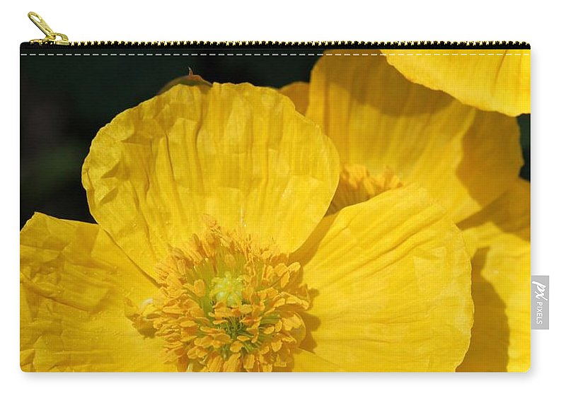 Mccombie Carry-all Pouch featuring the photograph Yellow Iceland Poppy by J McCombie
