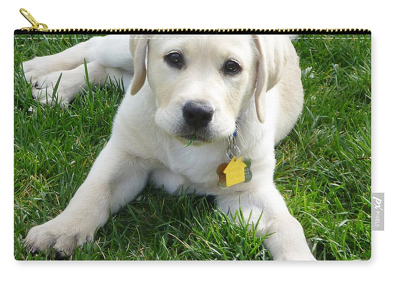 Yellow Lab Puppy Got A Ball Carry-all Pouch