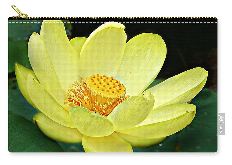 Nelumbo Lutea Carry-all Pouch featuring the photograph Yellow Lotus by William Tanneberger