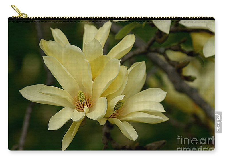 Magnolia Carry-all Pouch featuring the photograph Yellow Magnolia by Living Color Photography Lorraine Lynch