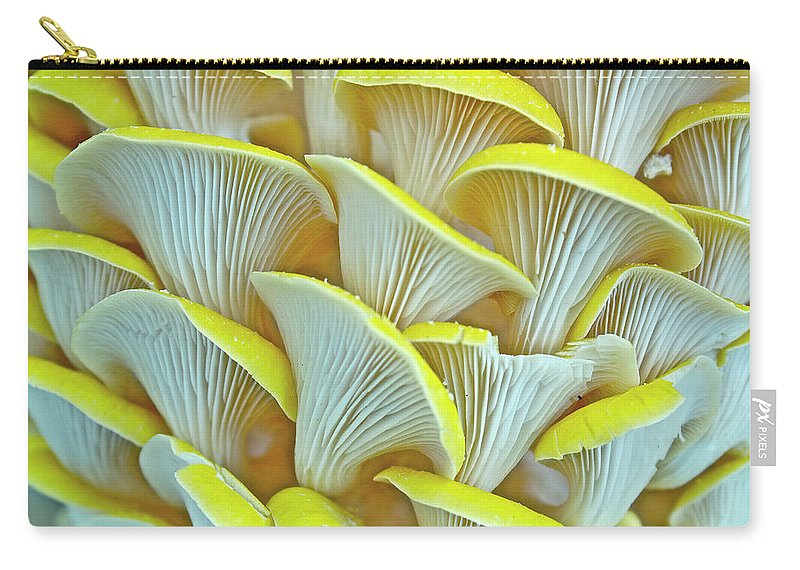 Edible Mushroom Carry-all Pouch featuring the photograph Yellow Oyster Mushrooms by Keith Getter