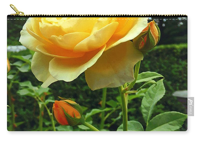 Rose Carry-all Pouch featuring the photograph Yellow Rose And Buds by Susan Savad
