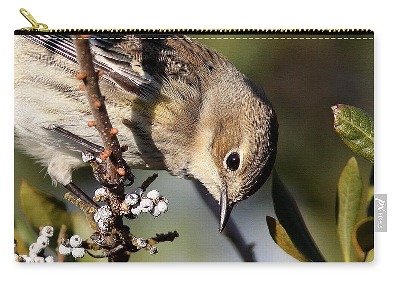 Yellow-rumped Warbler Carry-all Pouch featuring the photograph Yellow-rumped Warbler - Precious by Travis Truelove