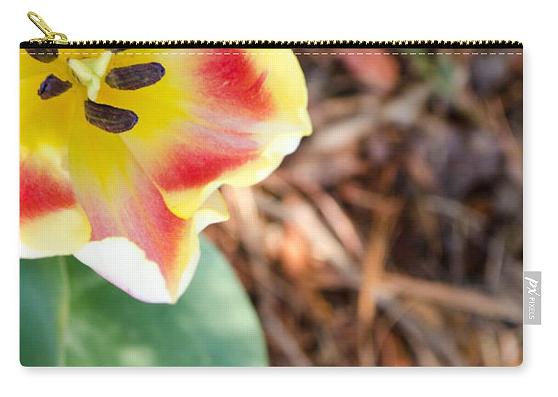 Flower Carry-all Pouch featuring the photograph Yellow Tulip by Andrea Anderegg
