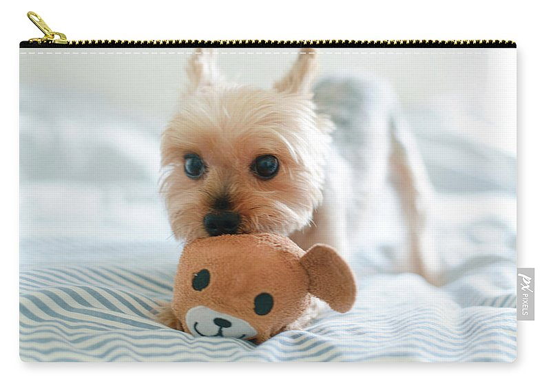 Pets Carry-all Pouch featuring the photograph Yorkie Playing With Teddy Toy by Cheryl Chan