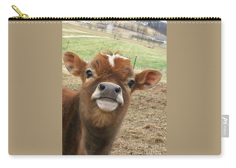 Cow Carry-all Pouch featuring the photograph You Looking At Me by Sara Raber